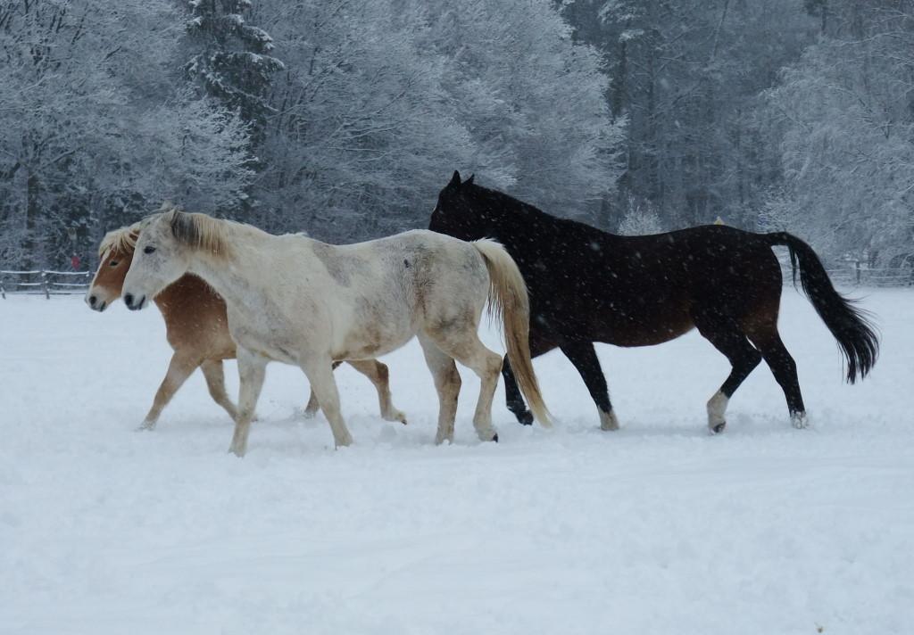brauchen pferde mineralfutter
